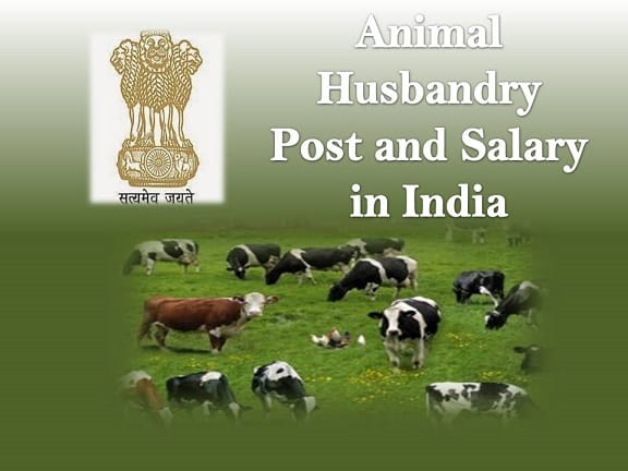 Animal Husbandry Post and Salary in India